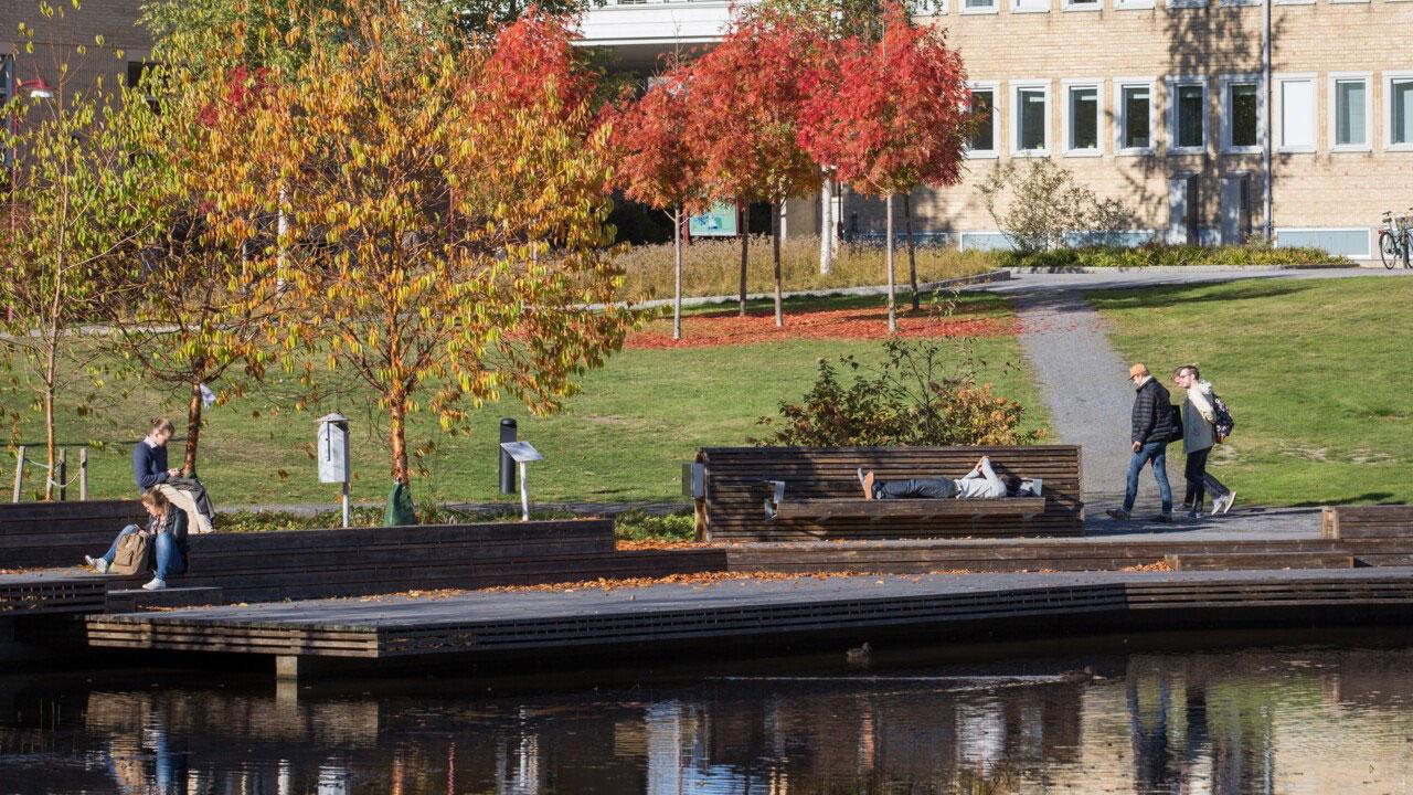Umeå universitets teknisk-naturvetenskapliga program ökar kraftigt. Foto: Ulrika Bergfors.